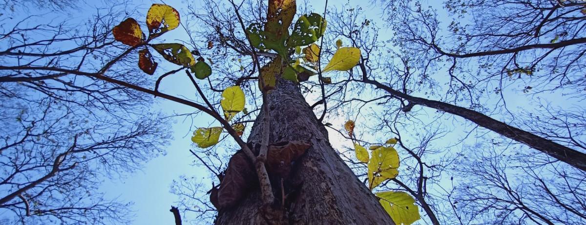 Kiến trúc sư Huy Phạm: Người mê gỗ